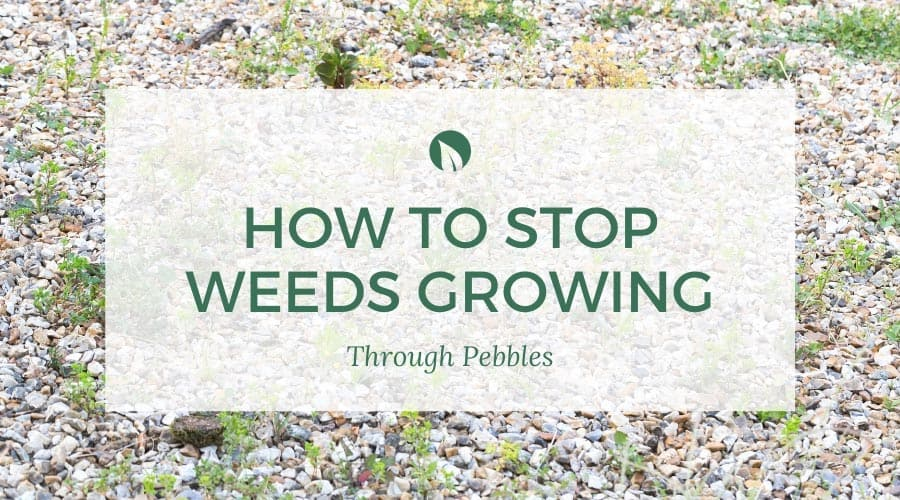 How To Stop Weeds Growing Through Pebbles