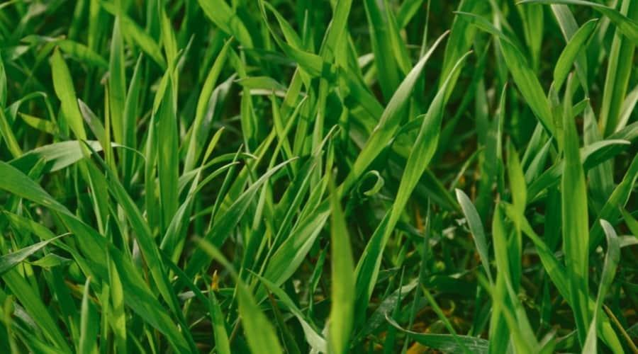 Is Grass A Decomposer