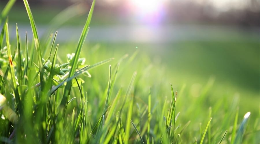 Is Grass An Organism