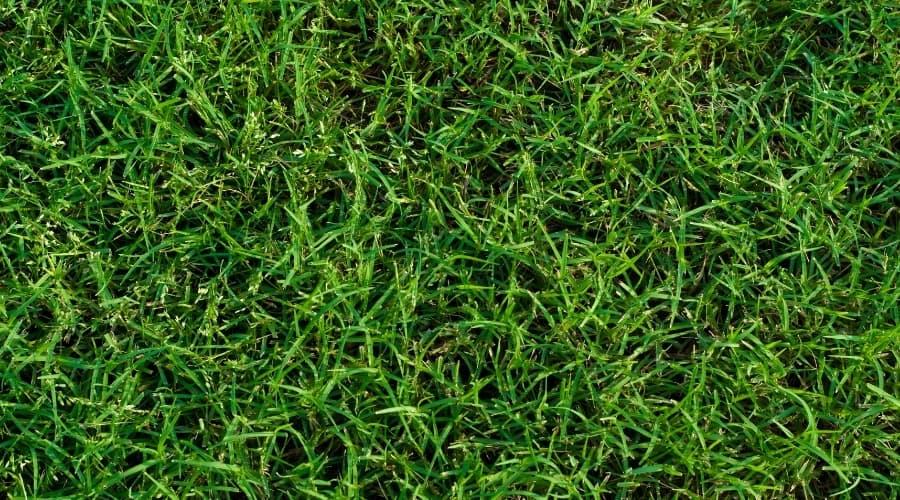 What Animals Eat Bermuda Grass